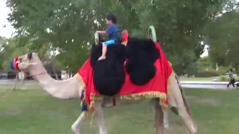 Baby enjoing by camel riding.. uae