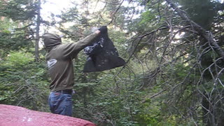 Bagging a Hornets Nest - Video