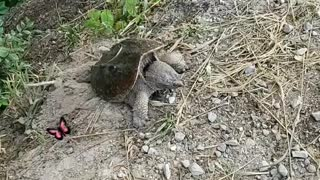 Most unusual turtle I've seen