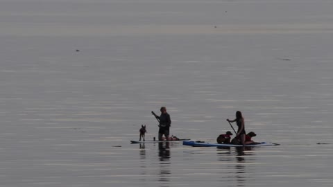 Pups learn to paddleboard