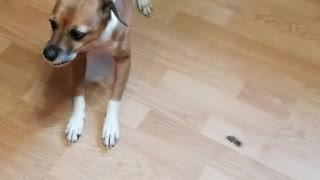 Depressed adopted dog only gets excited when going for a walk