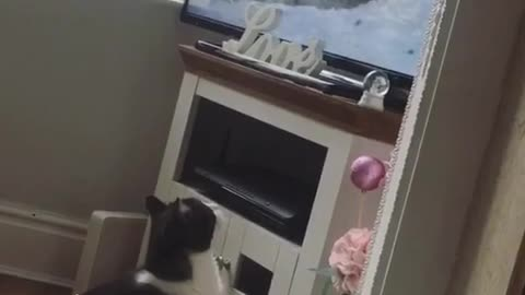 Cats reaction to the tv