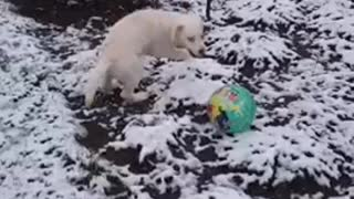 Cute Dog Playing Ball In The Snow