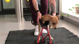 Disabled Dog Receives 3D Printed Prosthetic
