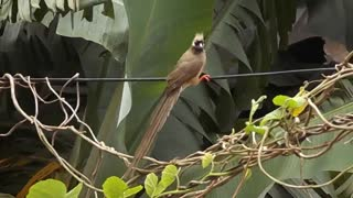Hear and watch an amazing video of a beautiful parrot