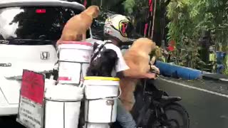 Furry Friends Going for a Ride