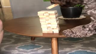 Clever Dog Plays Jenga with His Owner