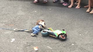 Walking street monkey show Surabaya.  - Video