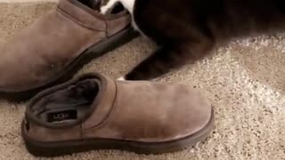 Cat playing with slippers - Video