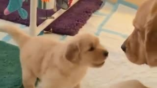Funny Dogs - A Cute And Funniest Puppy Videos Compilation  CUTE OVERLOAD - Video