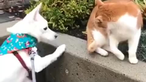 Dog tries to be friends with a cat and it's not successful...AT ALL!