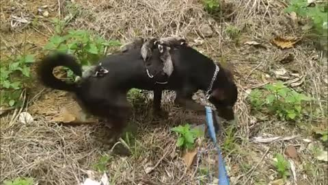 Dog Gives A Ride To Some Unusual Friends