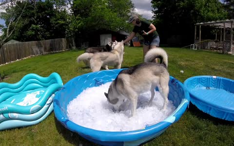 Ice pool for the huskies