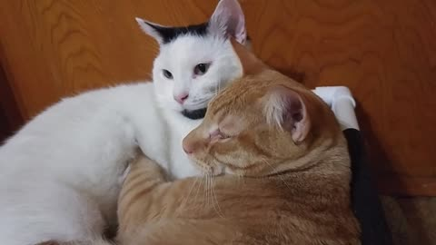 Cat gives best friend a loving massage