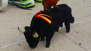 Dog Riding Mechanical Bull - Video