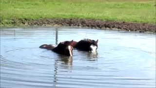 Horses Blowing Bubbles Under The Water Surface