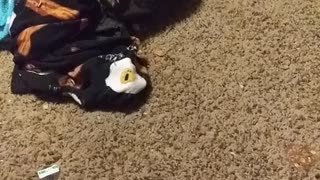 Kitten going crazy