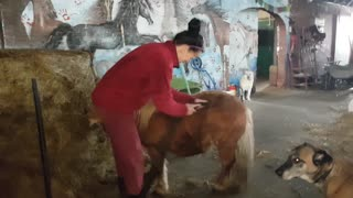 Grooming my horse - Video