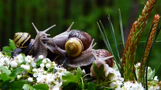 How does a snail walk
