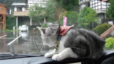 Car's windshield wipers send cat into playful frenzy