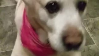 Dog creates steady beat for