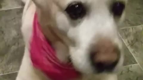 "Dog creates steady beat for ""rapping mom"""