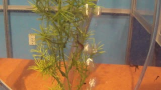 Baby Seahorses from Scripts Institute