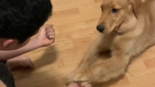 Eager puppy gets fooled by owner's magic trick