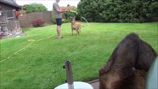 Young dog is crazy about the water hose