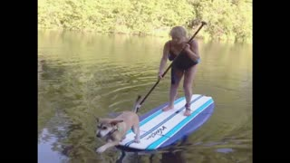 Why You Shouldn't Take Your Dog Paddle Boarding - Video