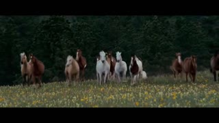 Must Watch – The Most Rebellious Horse Spirit! - Video
