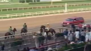 """""""Buying The Wrong Horse"""": One Of The Most Hilarious Horse Commercials"""