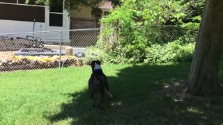 Dog fails at trying to grab tree branch