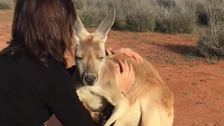 Kangaroo Cuddles by Queen Abi - Video