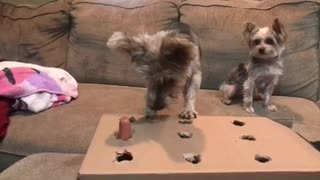 Dog plays Whack a Mole with hotdog
