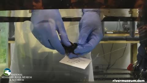 Baby shark hatches at Iowa aquarium