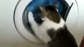 Very Funny Cat Playing With The Washign Machine - Video