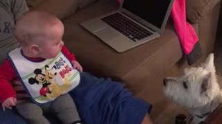Baby boy thinks his dog is absolutely hilarious! - Video