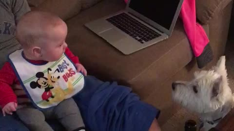 Baby boy thinks his dog is absolutely hilarious!