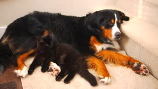 Dog and cat share lovely nap time - Video