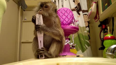 Smart monkey knows how to use nail file