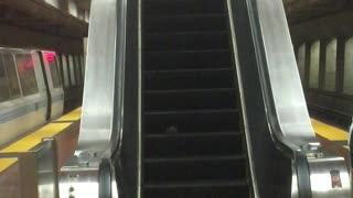 Rat Rides an Escalator - Video