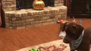 Dog loves to play volleyball with owner - Video