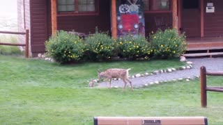Fawn and Bunny Playtime - Video