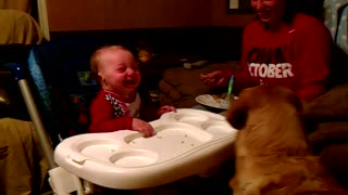 Baby can't stop laughing at dog eating green beans - Video