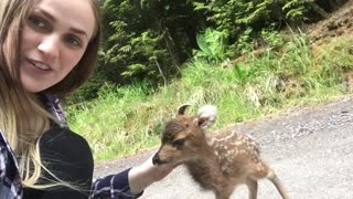 Fawns Closely Approach Woman