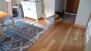 More charlie and bailey - kitten and puppy playing - Video