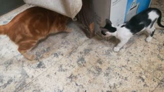 Father Cat Catches Rat Before His Kitty
