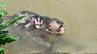Kidnapper Bring Baby Monkey In Water Nearly Die - Video