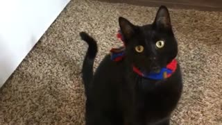 Black cat red scarf jumps at camera - Video